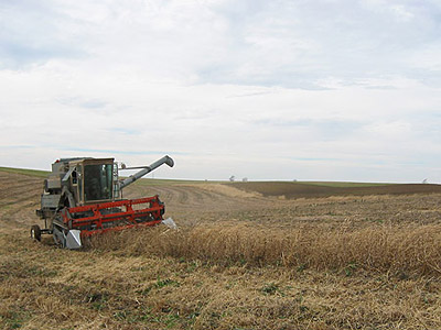 Combining the 2006 soybean crop