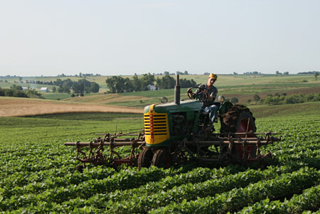 Cultivating soybeans, July 2008