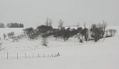 One of our apple orchards, January 2007
