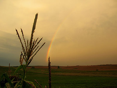 Rainbow and corn tassels