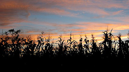 Sunset behind the corn field, August 2004.